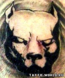 Татуировка питбуля с рельсой