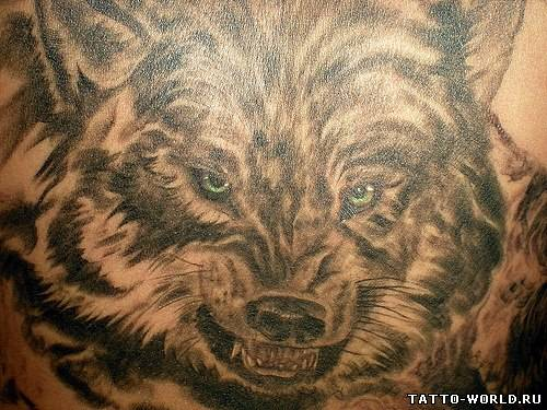 Волков » wolf tatto,wolfs tattos,tattoo wolf,tattos wols (84